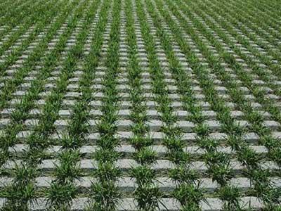 草坪绿化砖